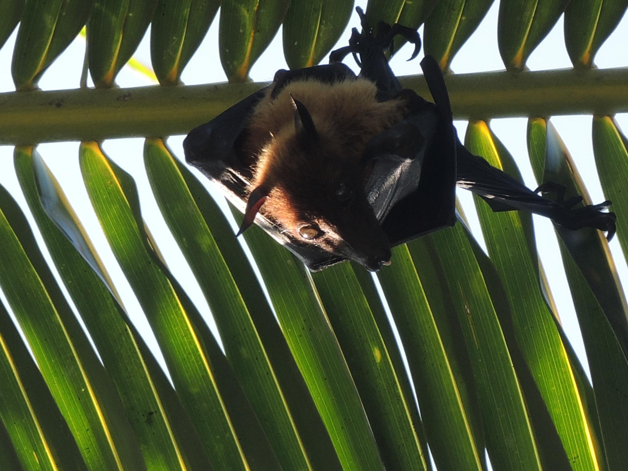 Hanging around by blauwerat