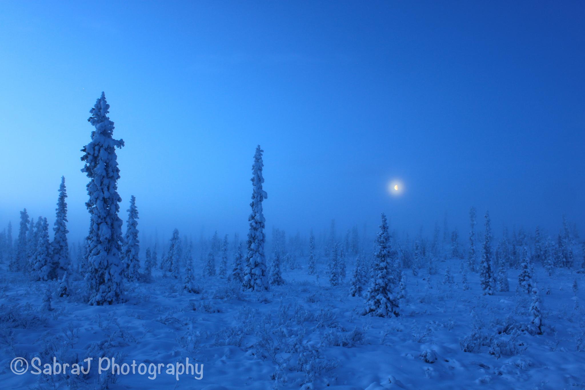 Cold sunrise  by SabraJ