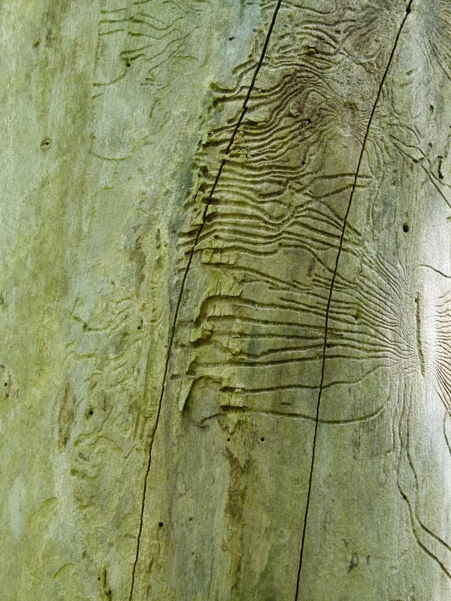 wood by peterliendeborg