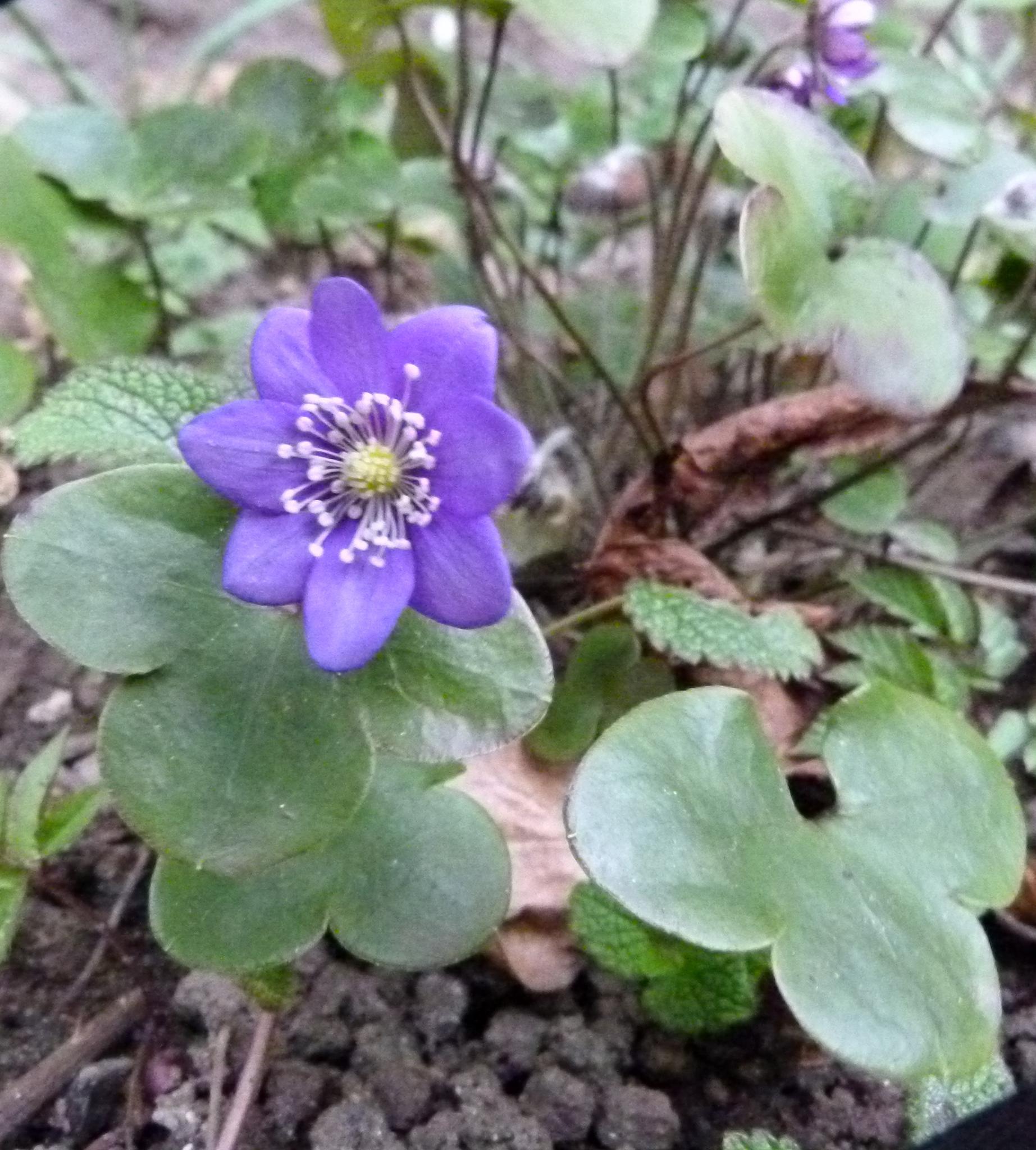 Its spring, isnt it :) by peterliendeborg