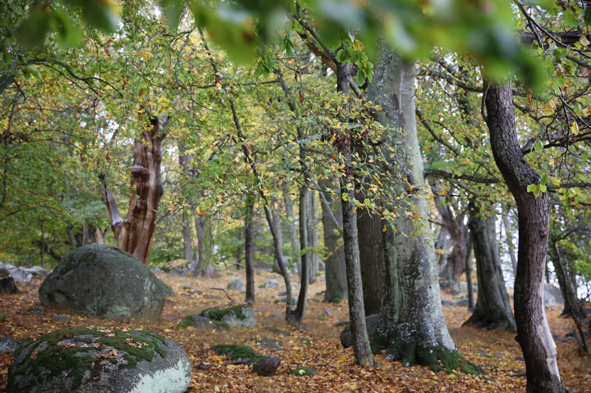 Autumn in Valje peninsula V by peterliendeborg