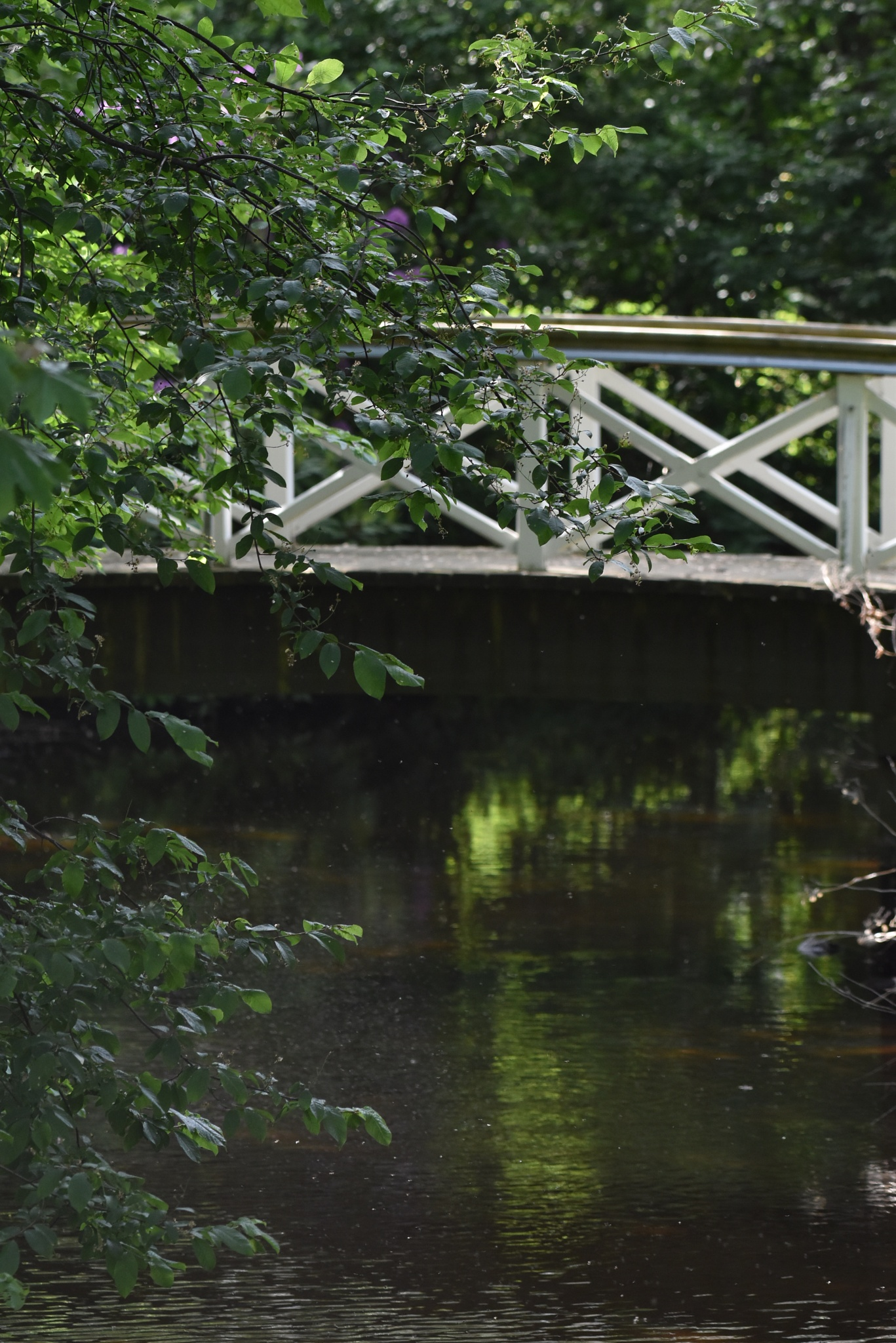 Photo in Landscape #bridge #river #nature