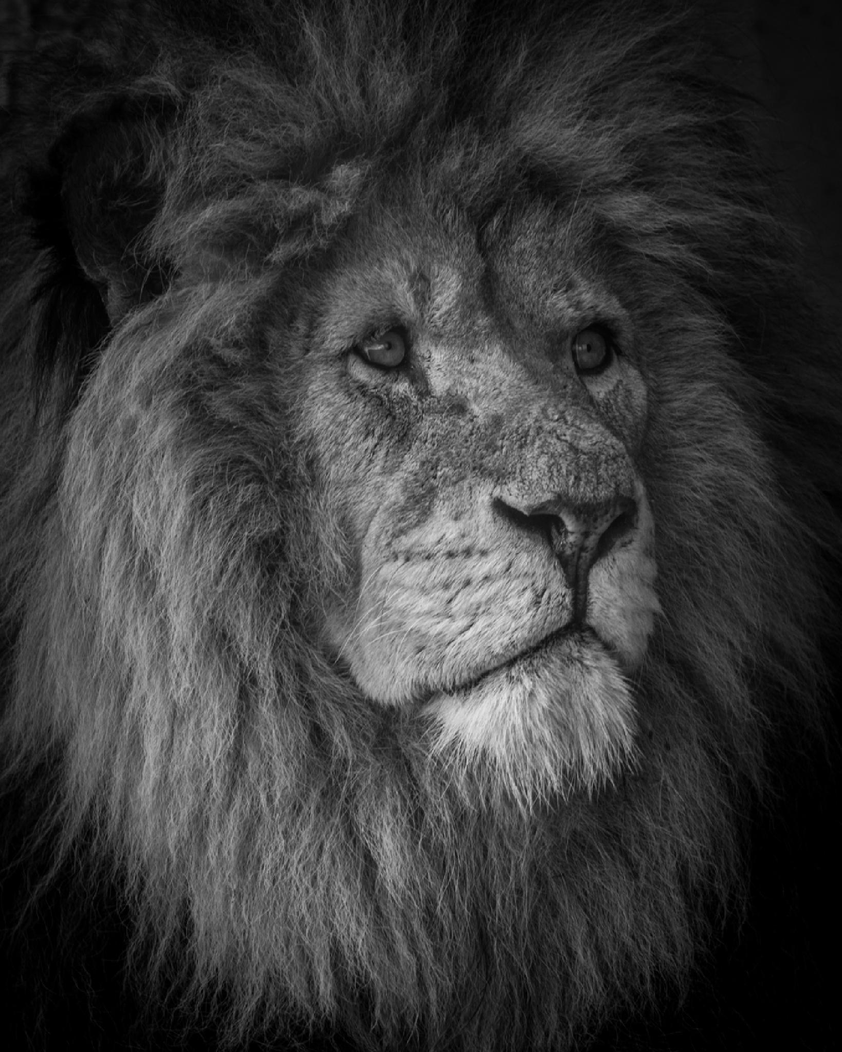 The King by Marac Andrzej Kolodzinski