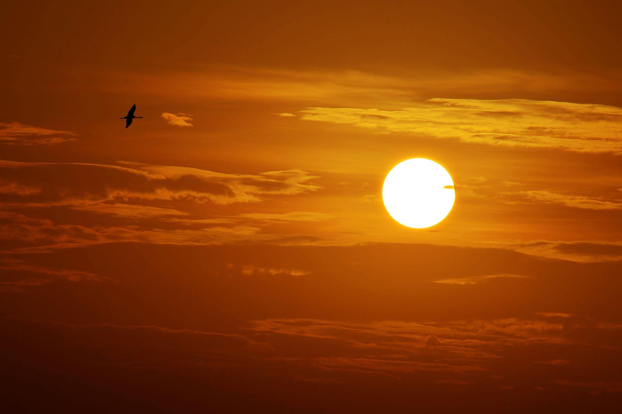 Sunset by Sourav Mishra
