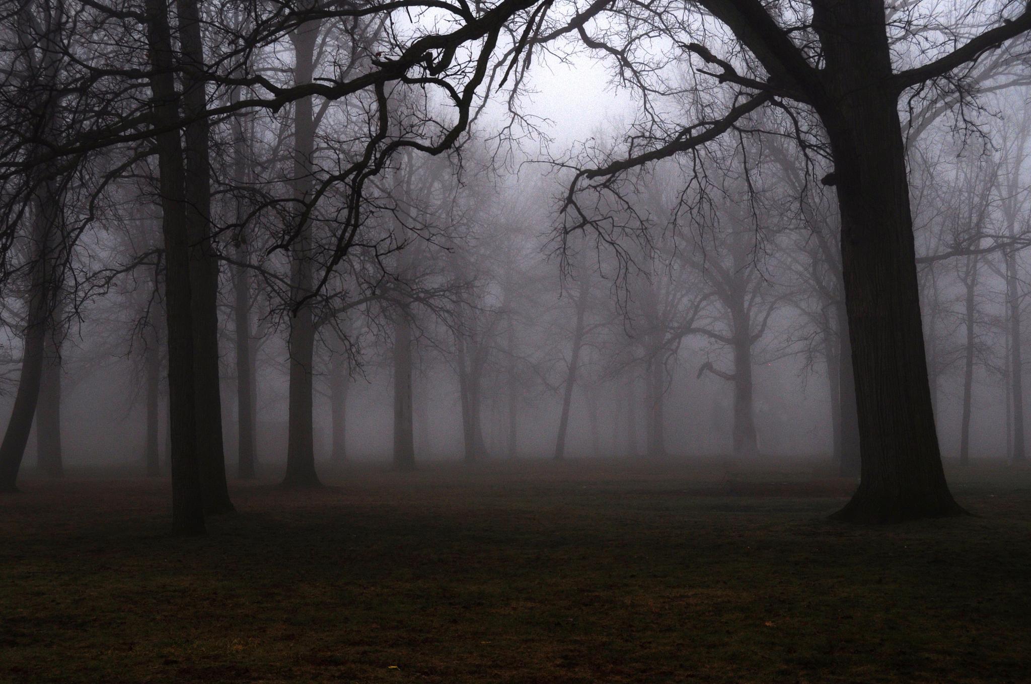 Morning fog by JanuaryFire