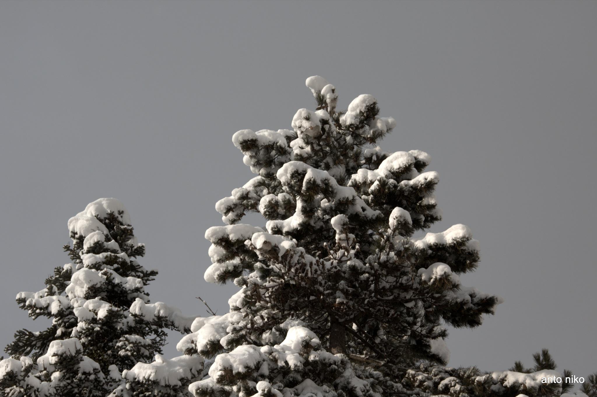 the of the tree!!!! by peskandritsa