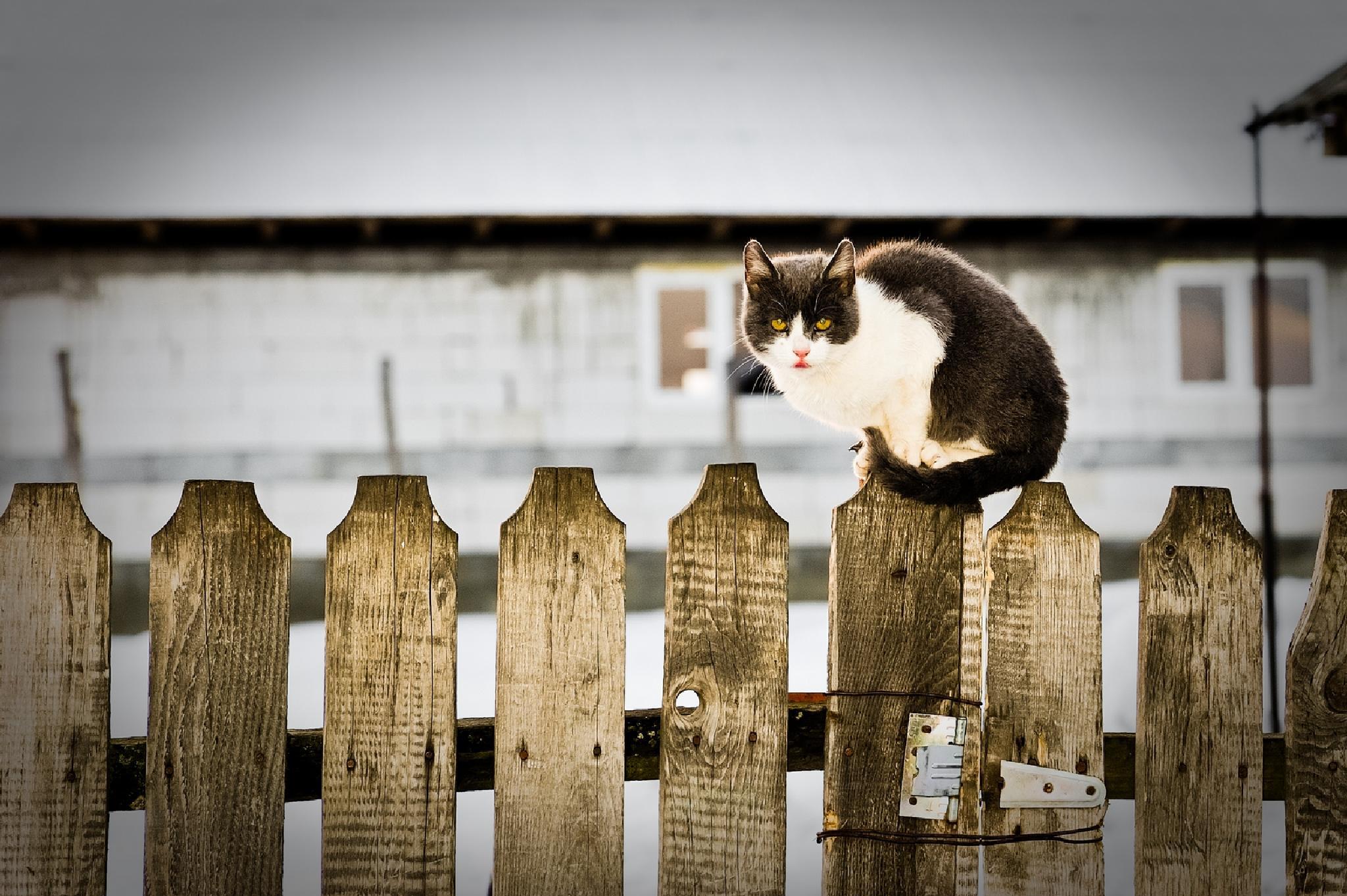 I'm watching you! by mihaipiscureanu