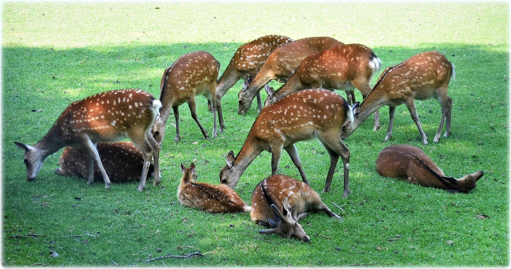 """""""fallow deers"""" by BauerStefan"""