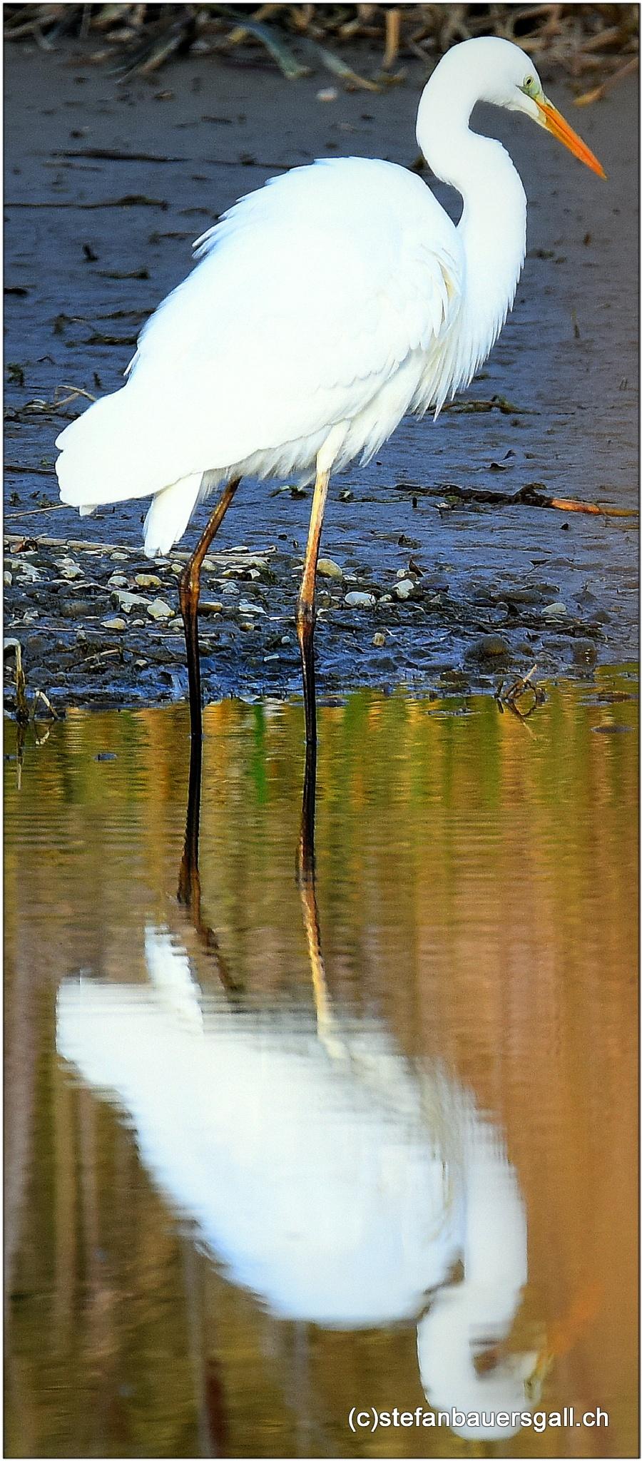"""silver heron"" by BauerStefan"