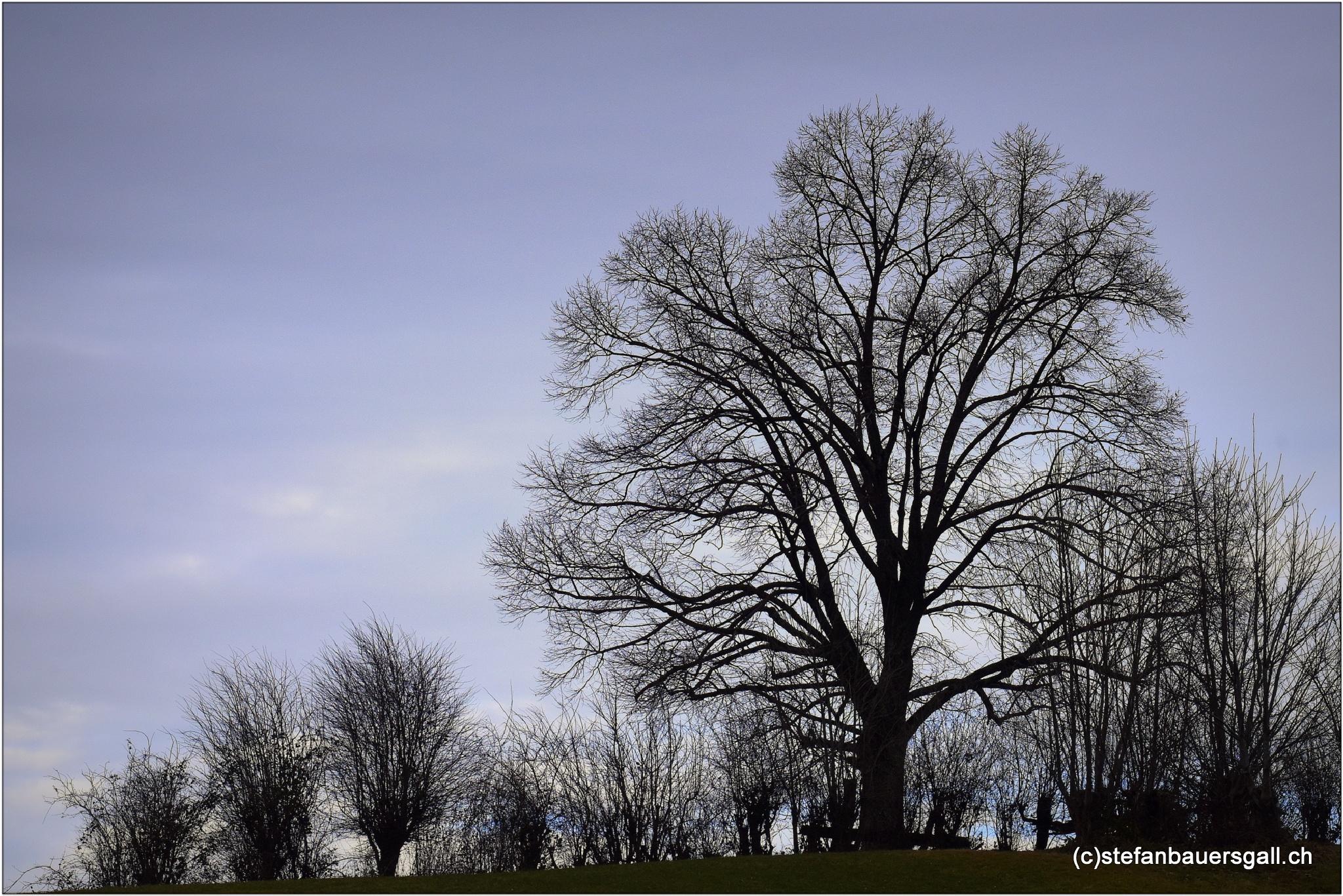 """""""winter.I"""" by BauerStefan"""