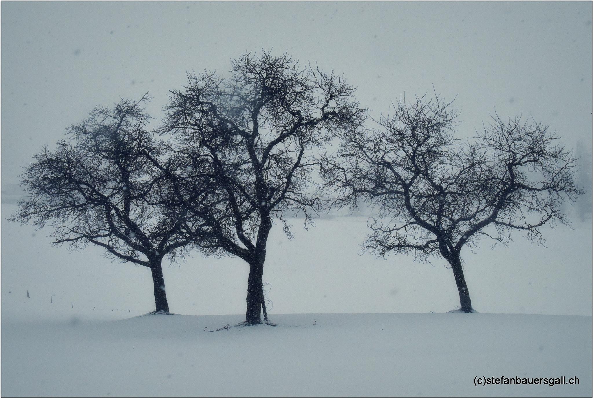 """""""winter fruit trees"""" by BauerStefan"""