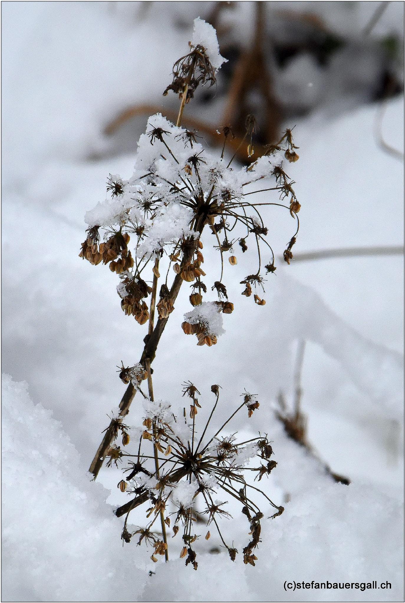"""""""winter stars"""" by BauerStefan"""