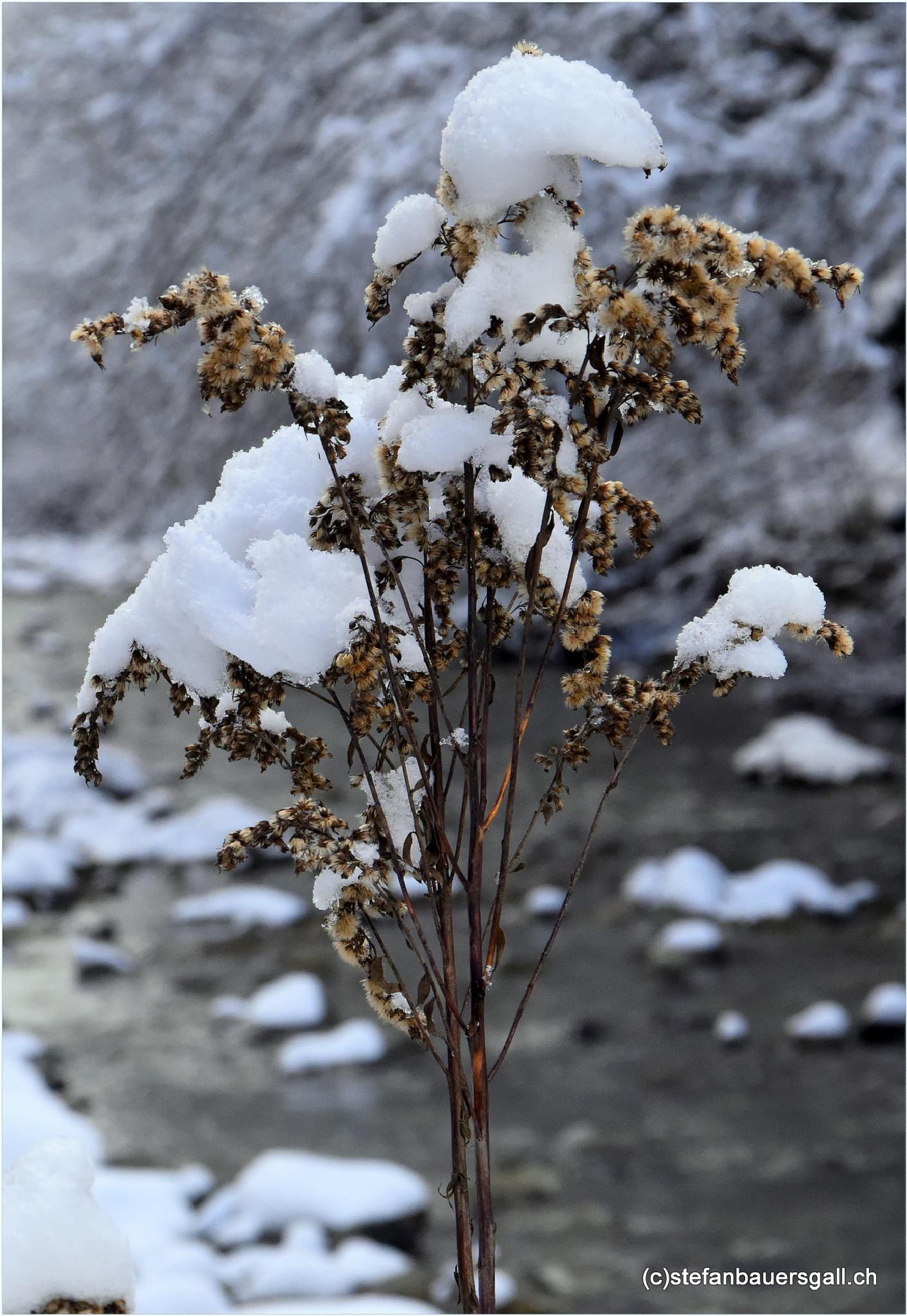 """plant"" by BauerStefan"