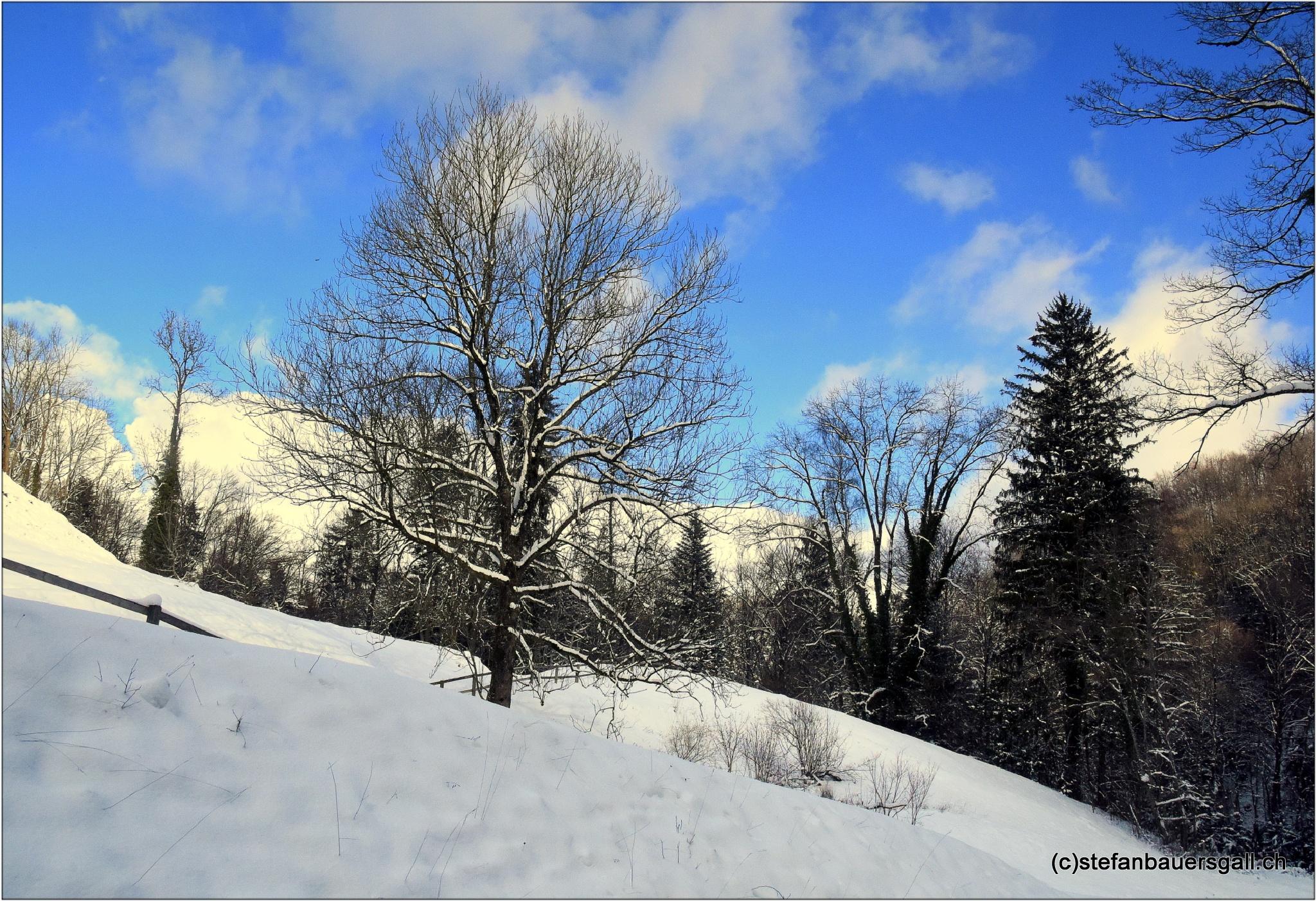 """""""wintertrees"""" by BauerStefan"""