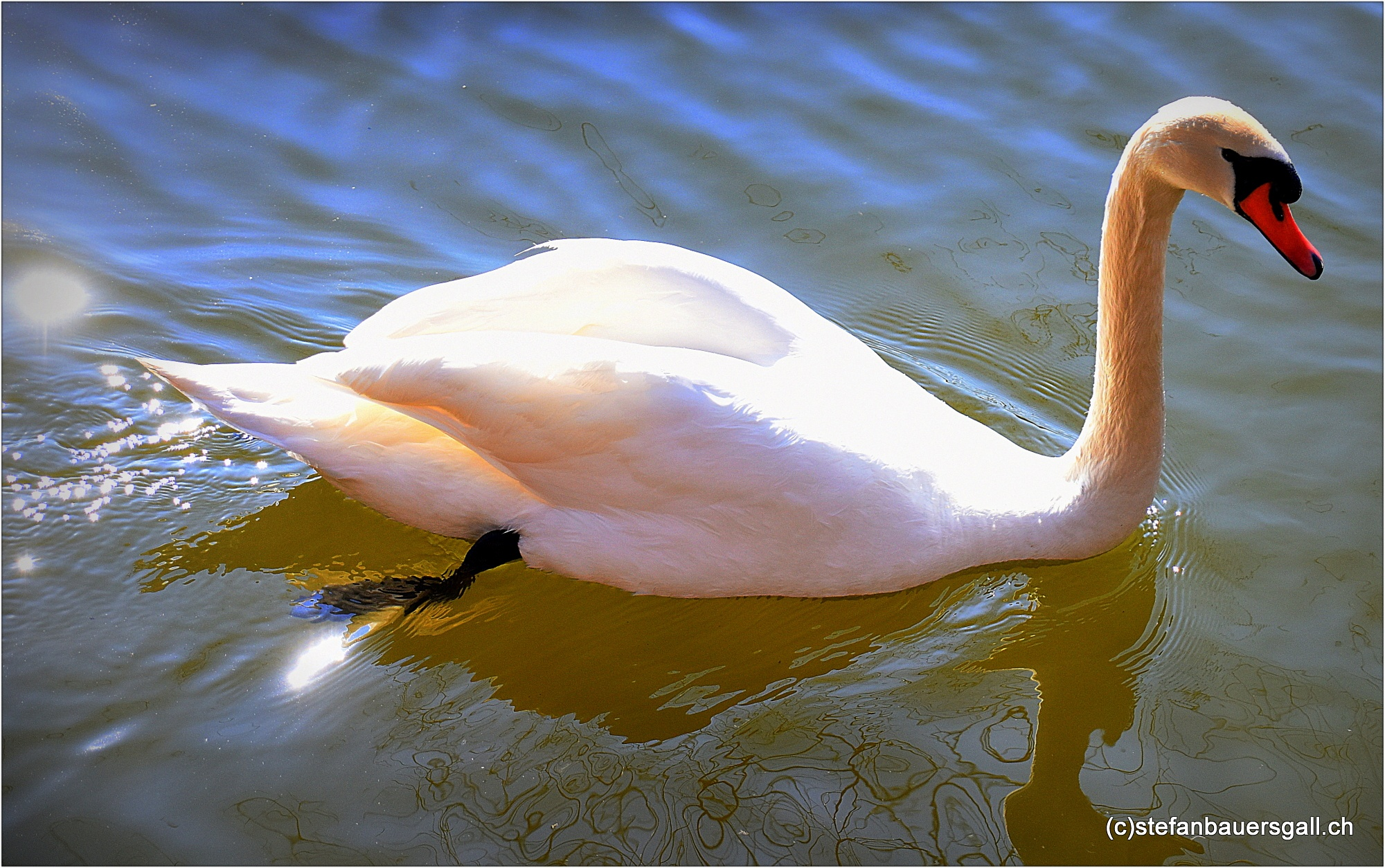 """""""swan"""" by BauerStefan"""