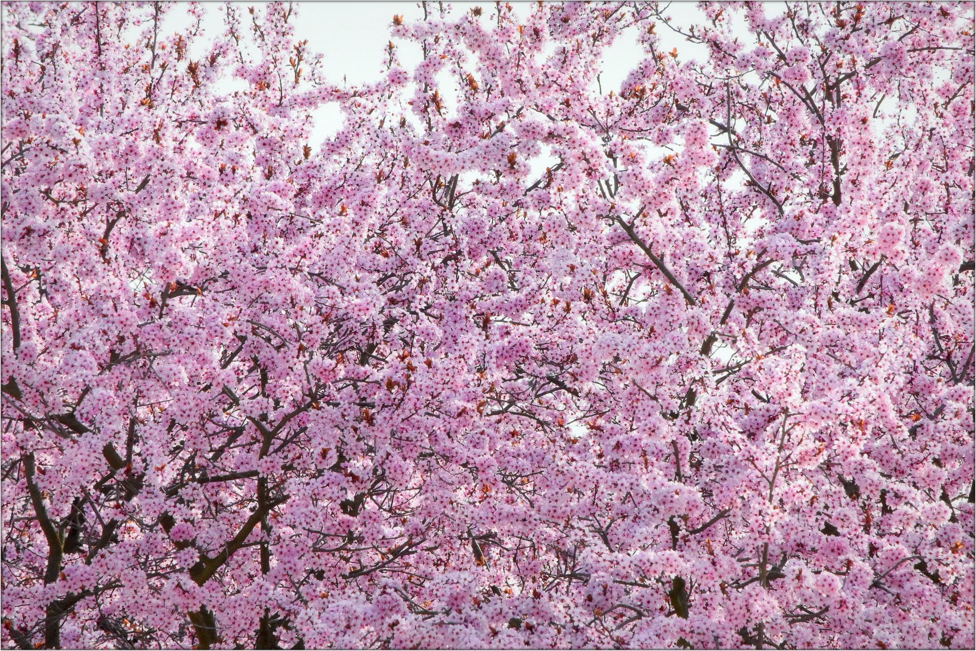 """springtime explosion"" by BauerStefan"