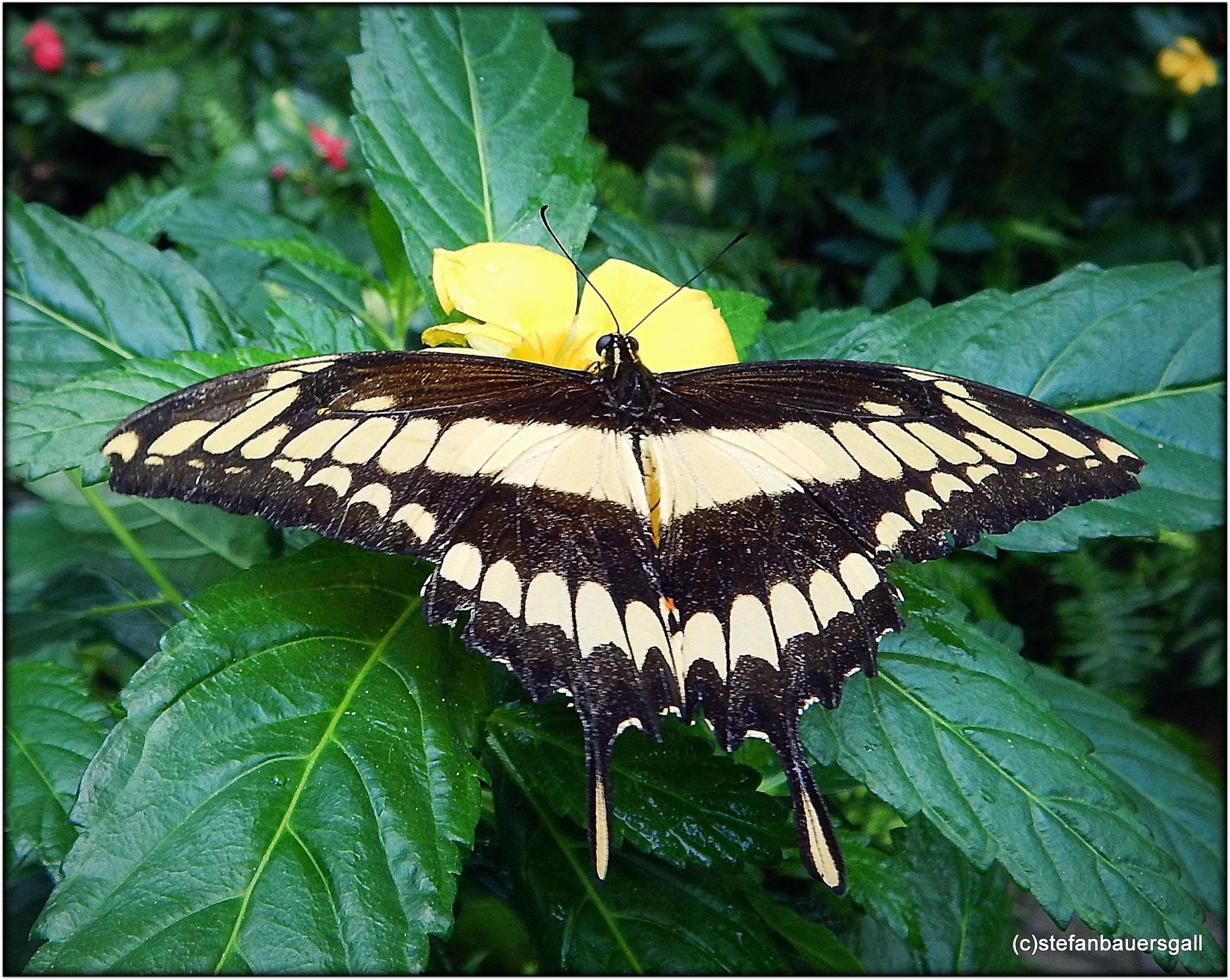 """""""butterfly/4"""" by BauerStefan"""