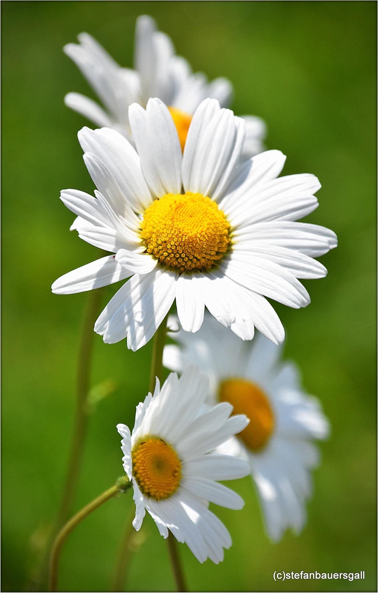 Photo in Nature #fleur