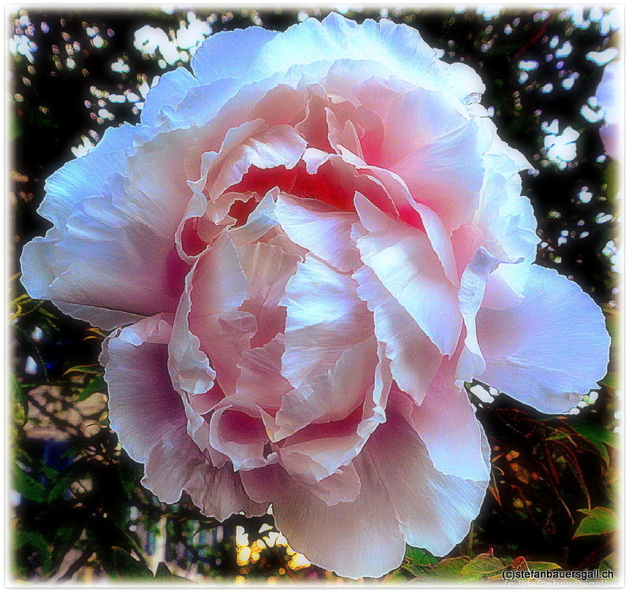 """""""bloomy."""" by BauerStefan"""