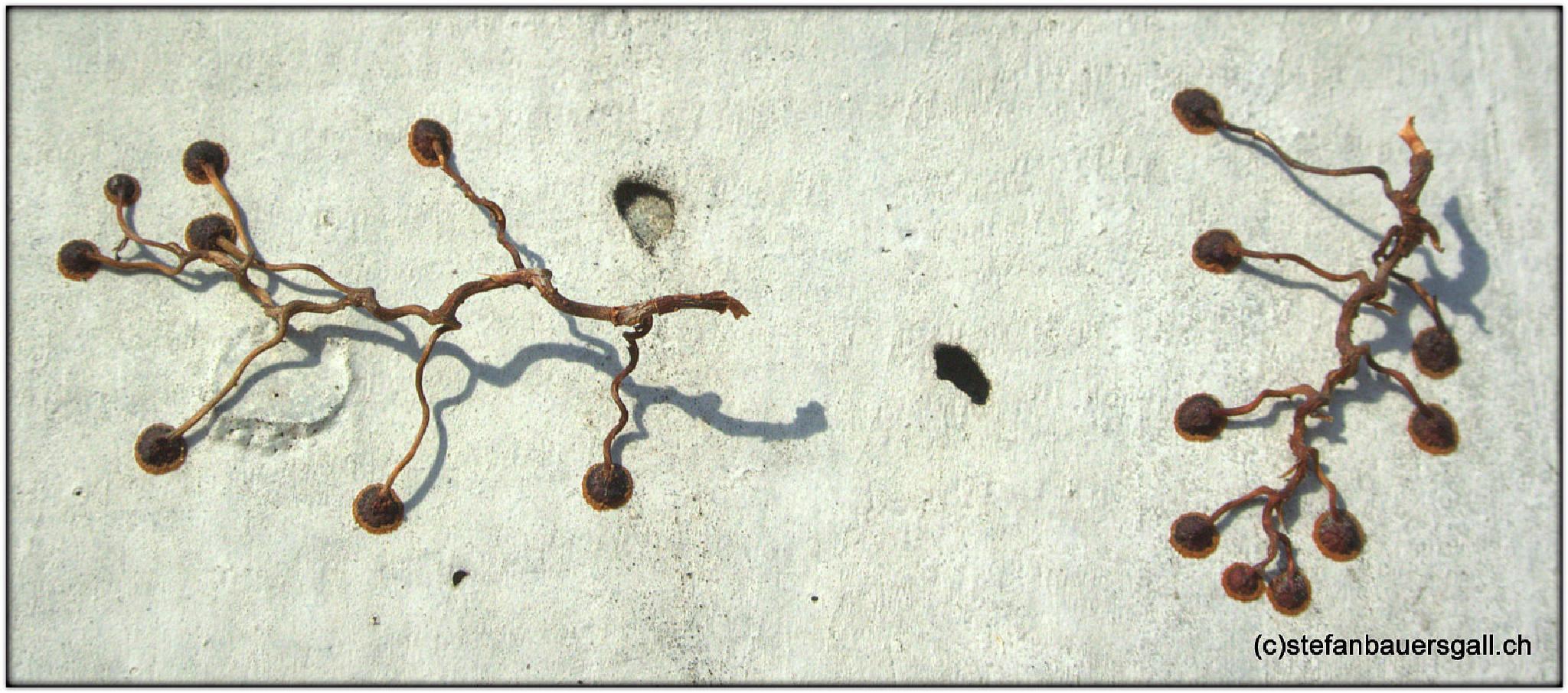 """natural holders."" by BauerStefan"