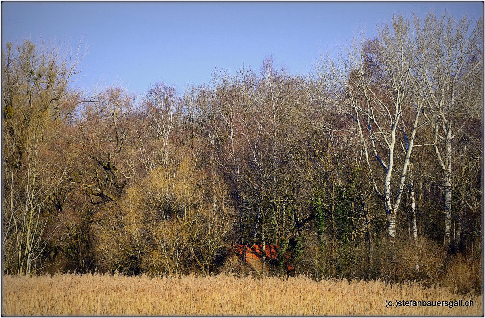 """house in the wilderness."" by BauerStefan"