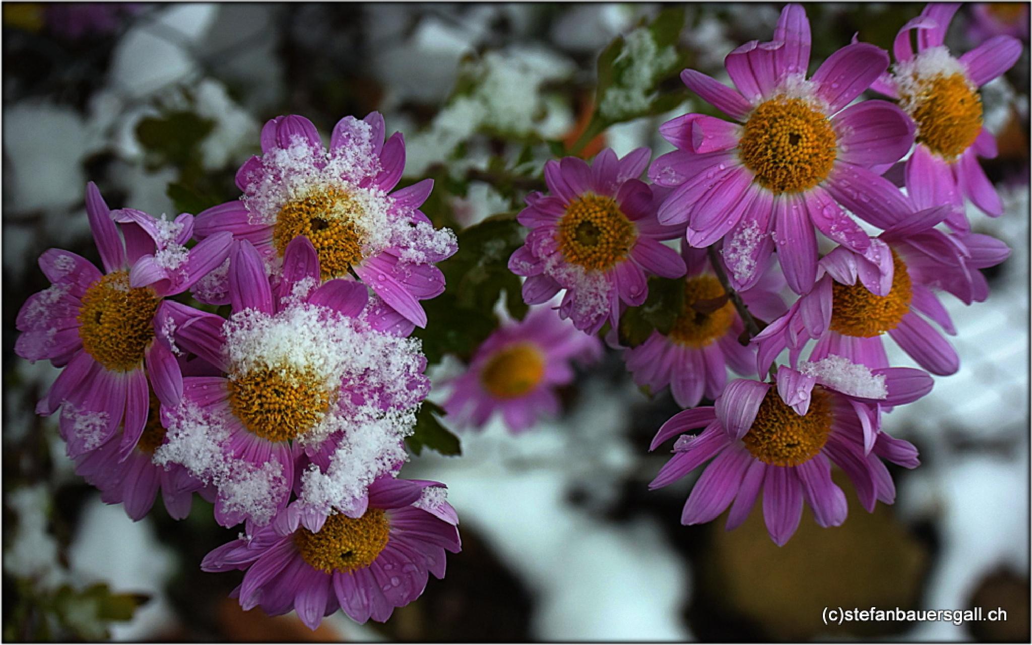 """cold nectar"" by BauerStefan"