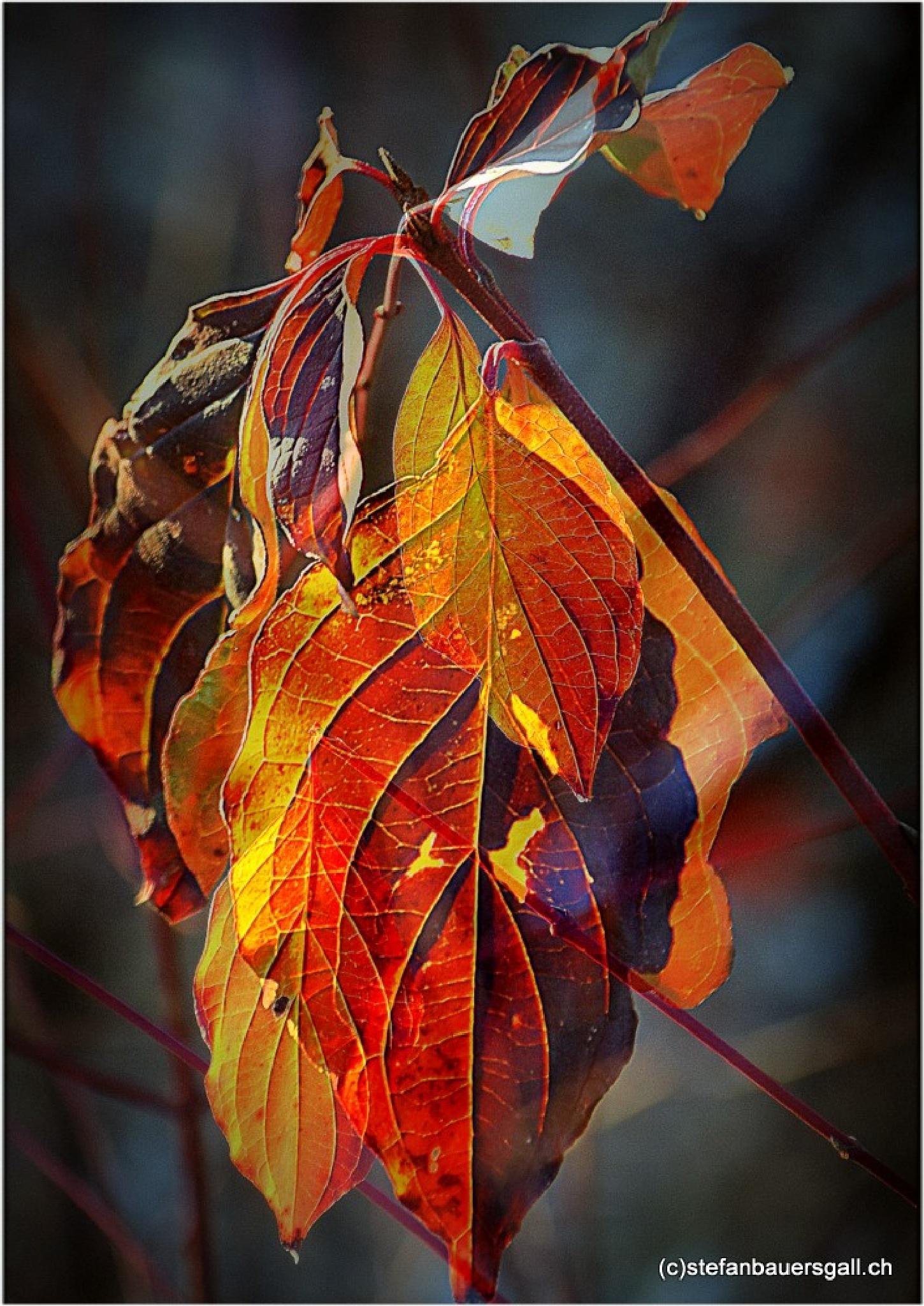 """""""hiver coeur"""" by BauerStefan"""