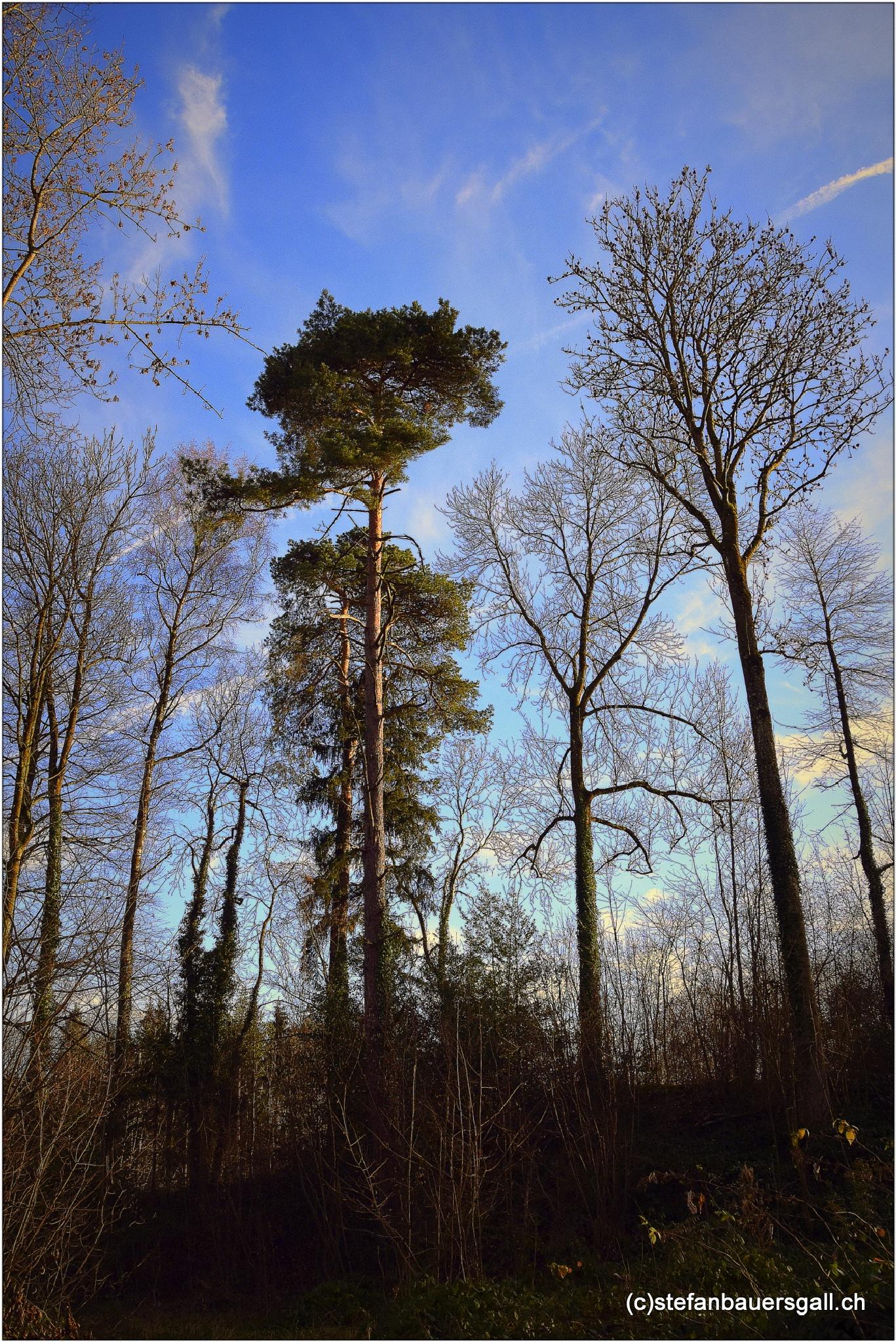 """""""trees"""" by BauerStefan"""