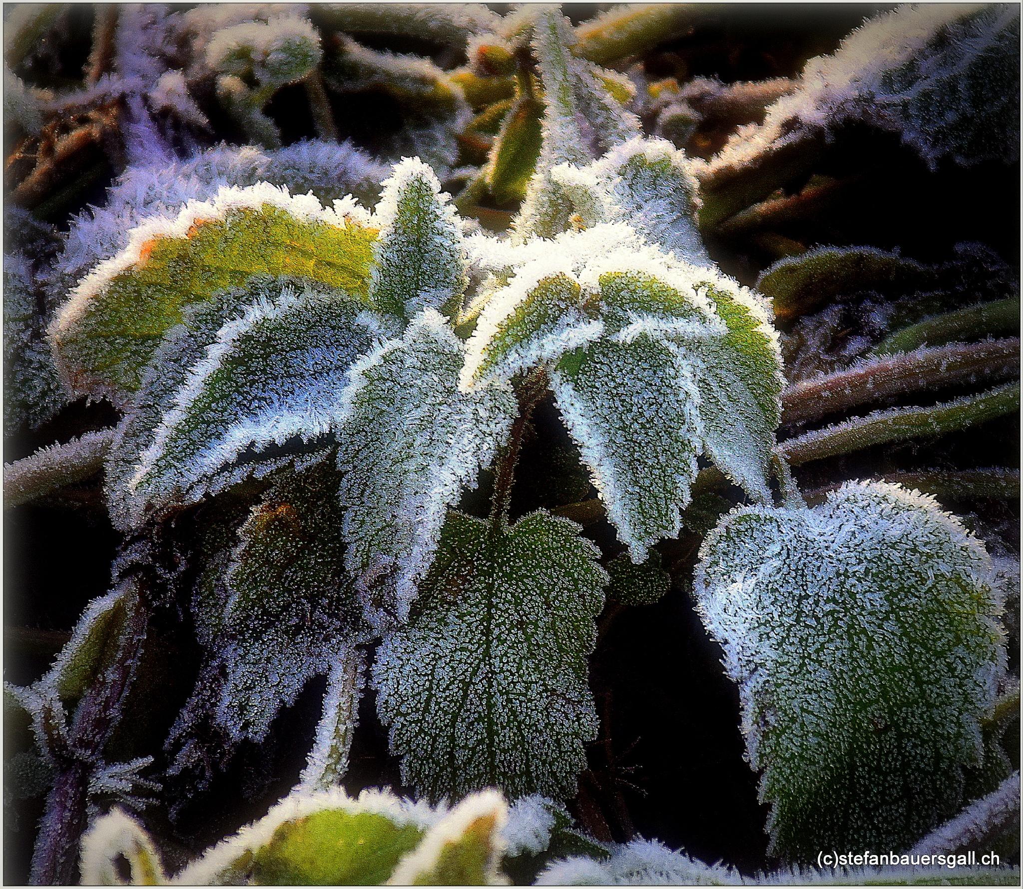 """""""frosty..."""" by BauerStefan"""