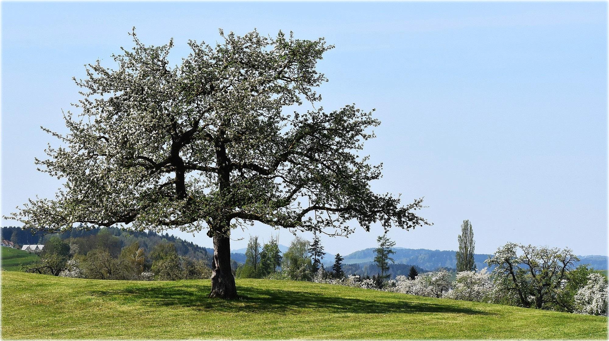 """""""printemps"""" by BauerStefan"""