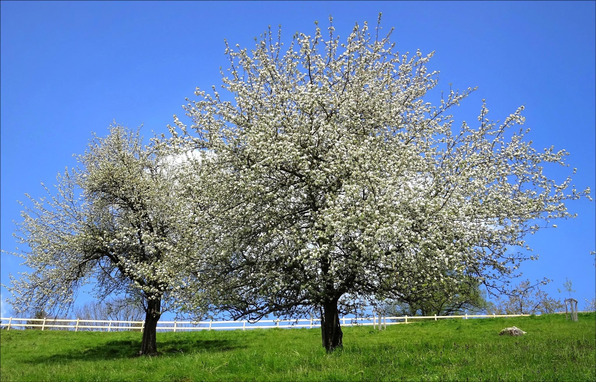 """""""spring"""" by BauerStefan"""