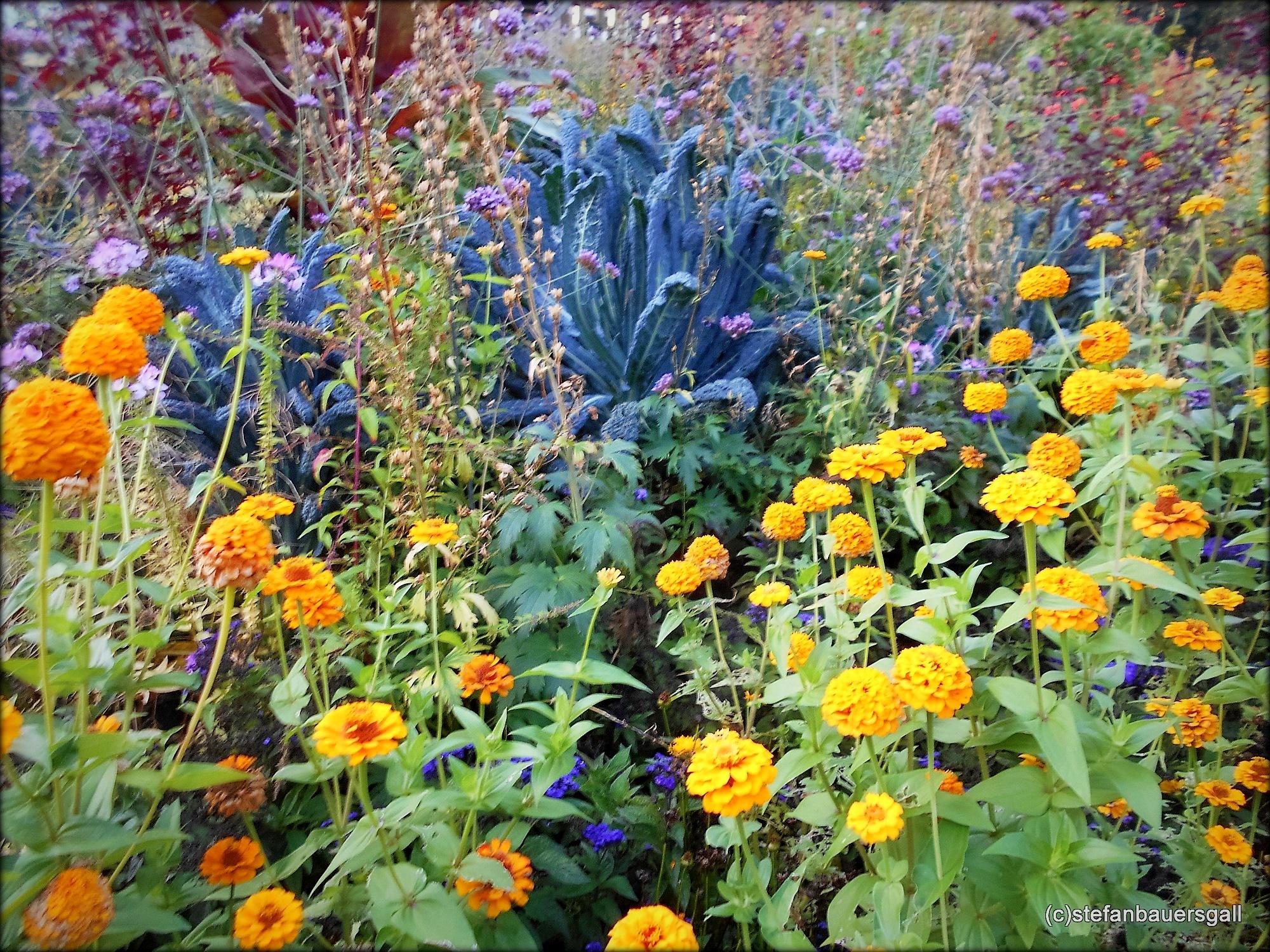"""""""fleurs"""" by BauerStefan"""