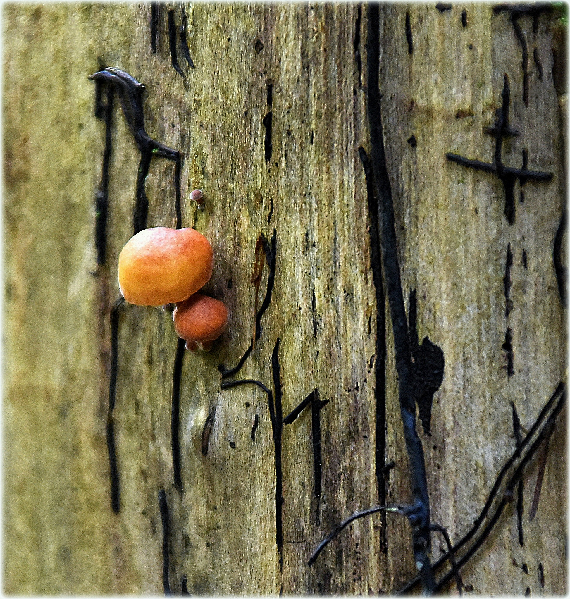 """""""petit-mushroom"""" by BauerStefan"""