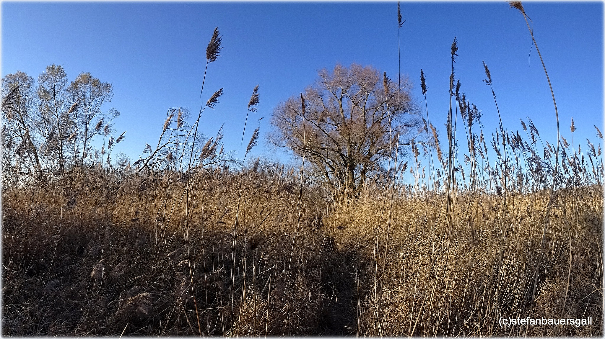 """""""reed and trees"""" by BauerStefan"""