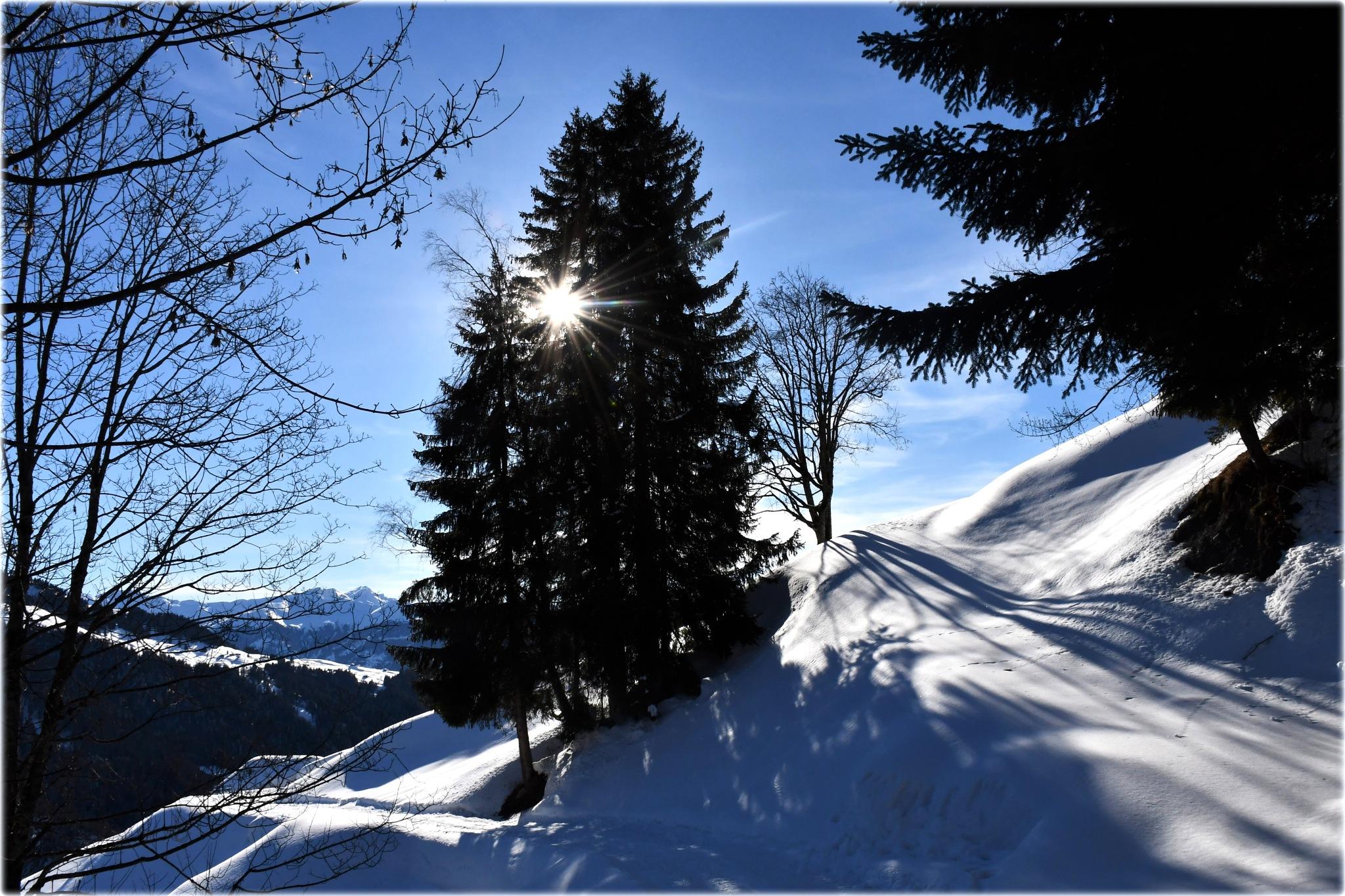 """snow magic"" by BauerStefan"