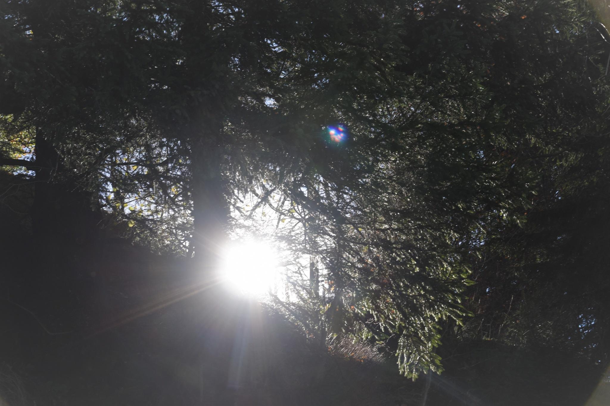 """""""sun"""" by BauerStefan"""