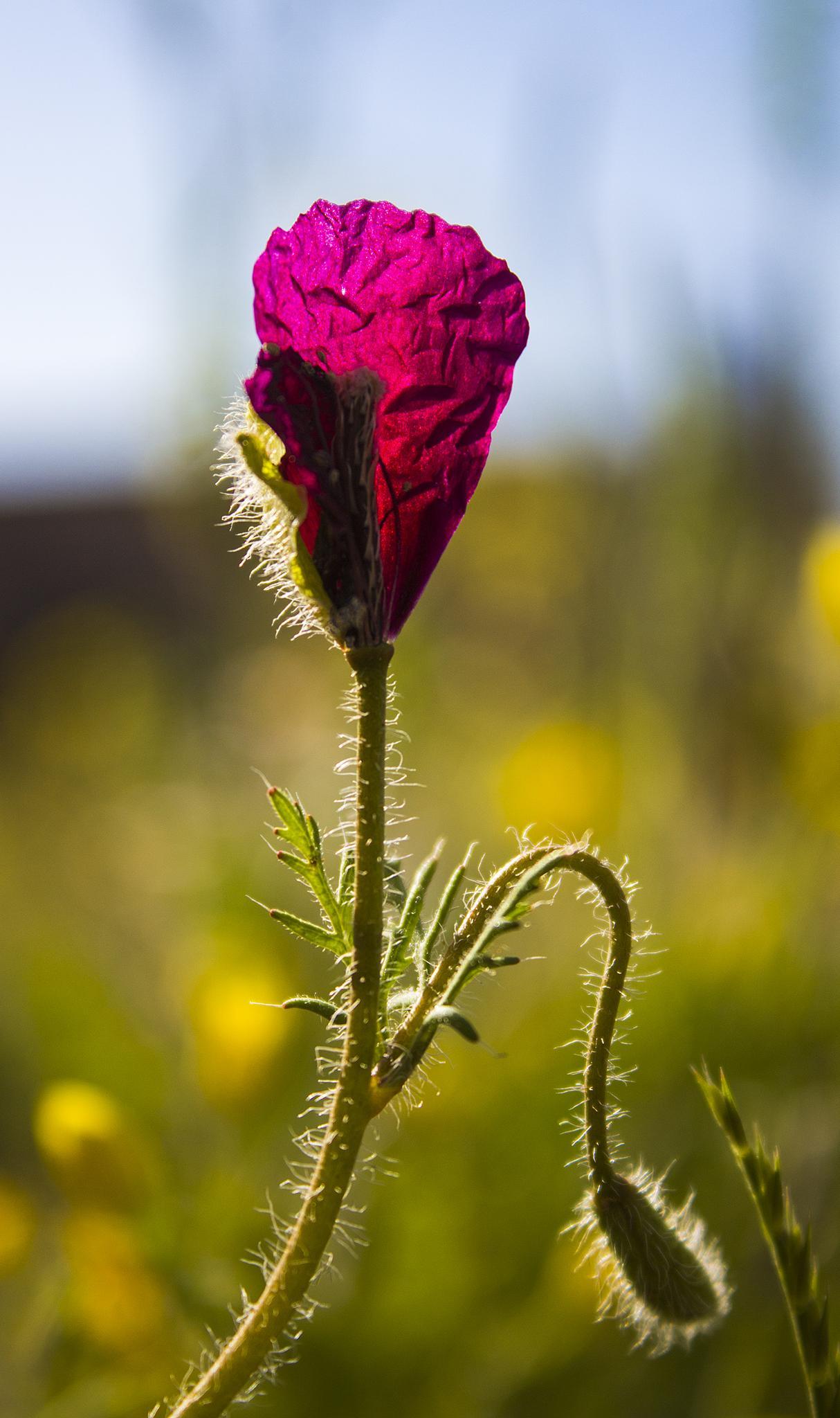 Photo in Landscape #flower #iran #sabzevar