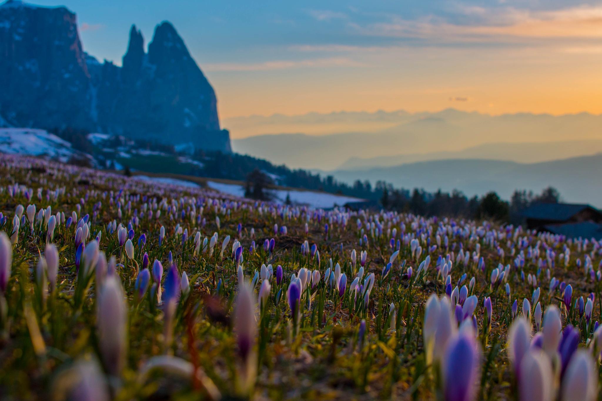 Seiser Alm Dolomites by romenstefan