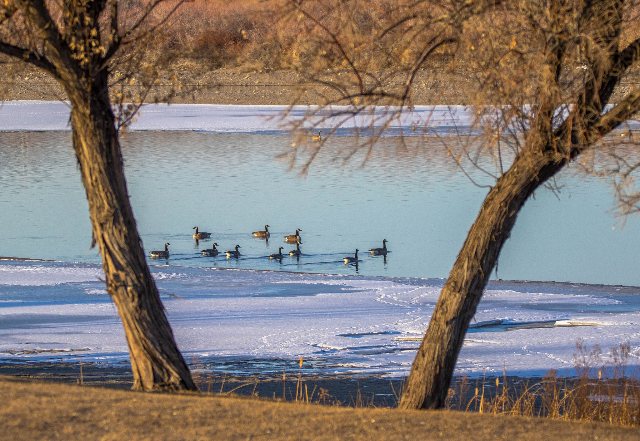 Calm Geese Morning by drchad480