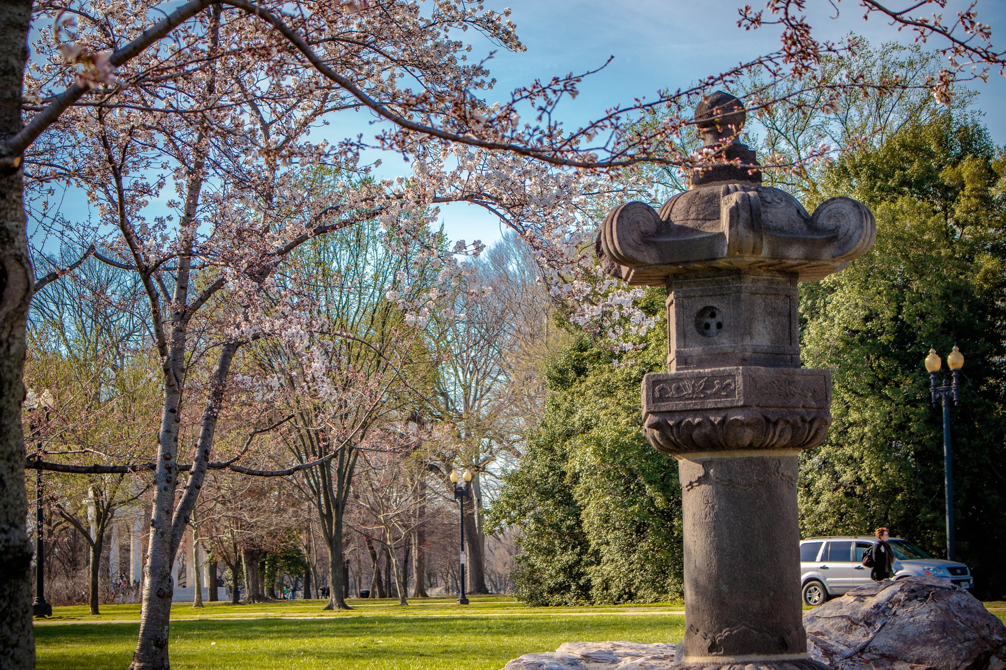 Ancient Cherry Tree Marker by drchad480