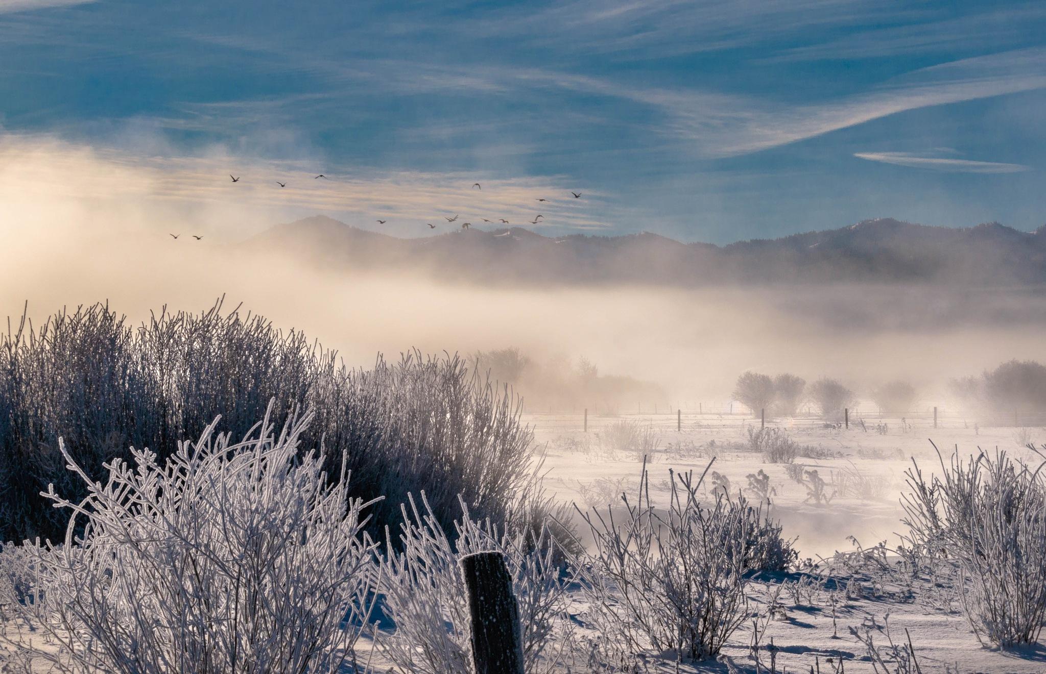 Frozen Scene by drchad480
