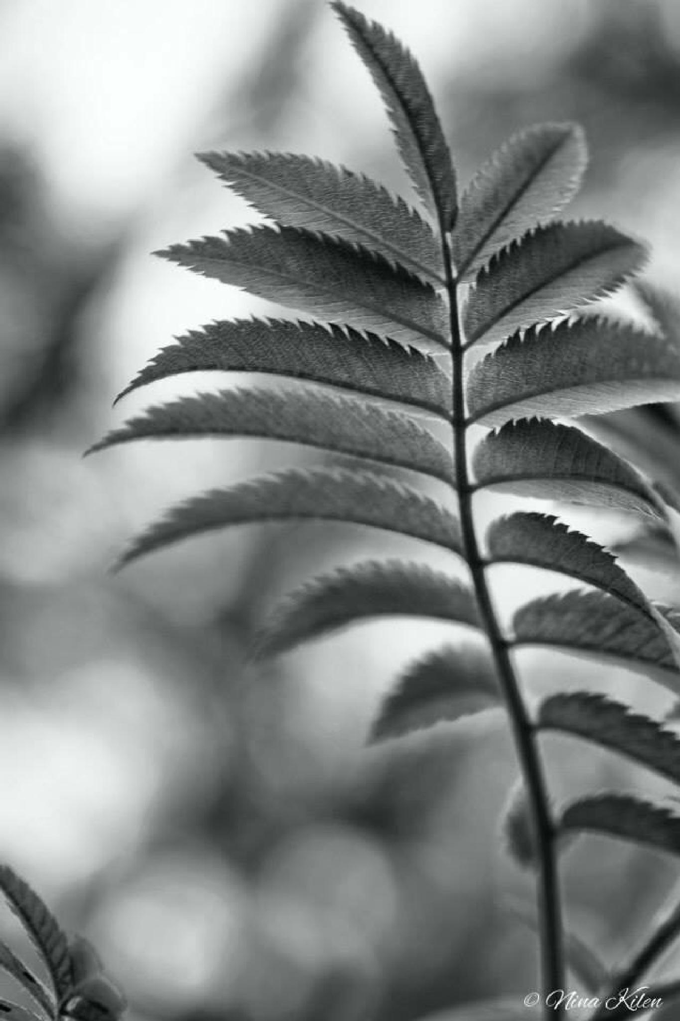 Leaf by nnordhavnkilen