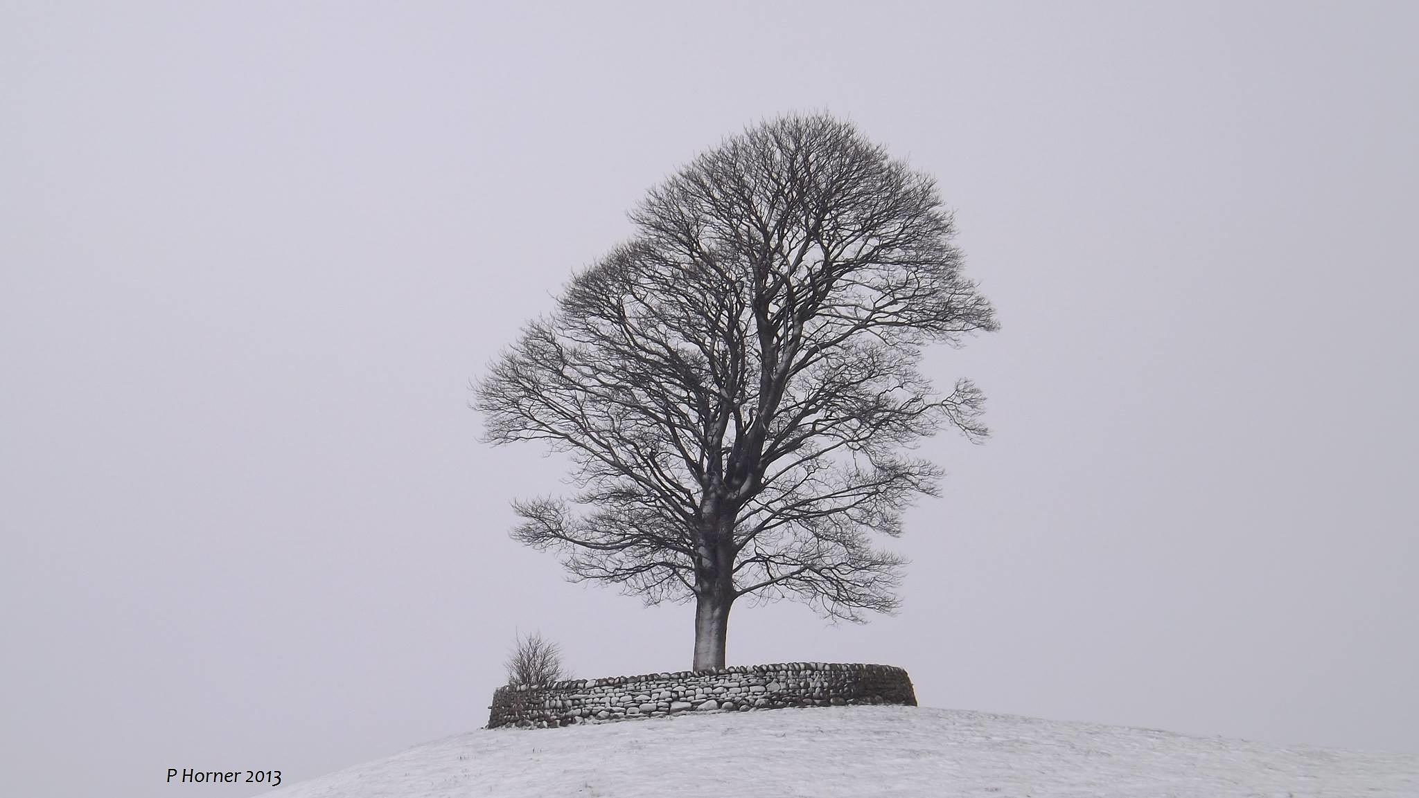 snowy tree by paul.m.horner