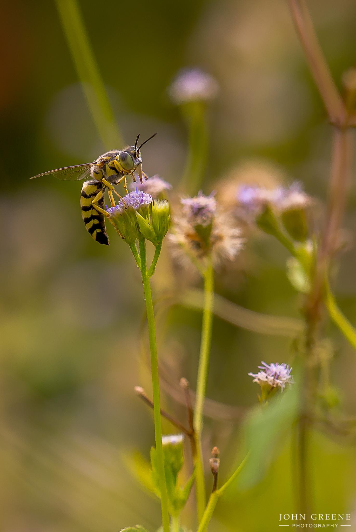Photo in Nature #bee #fower #macro #canon 180 mm #john greene
