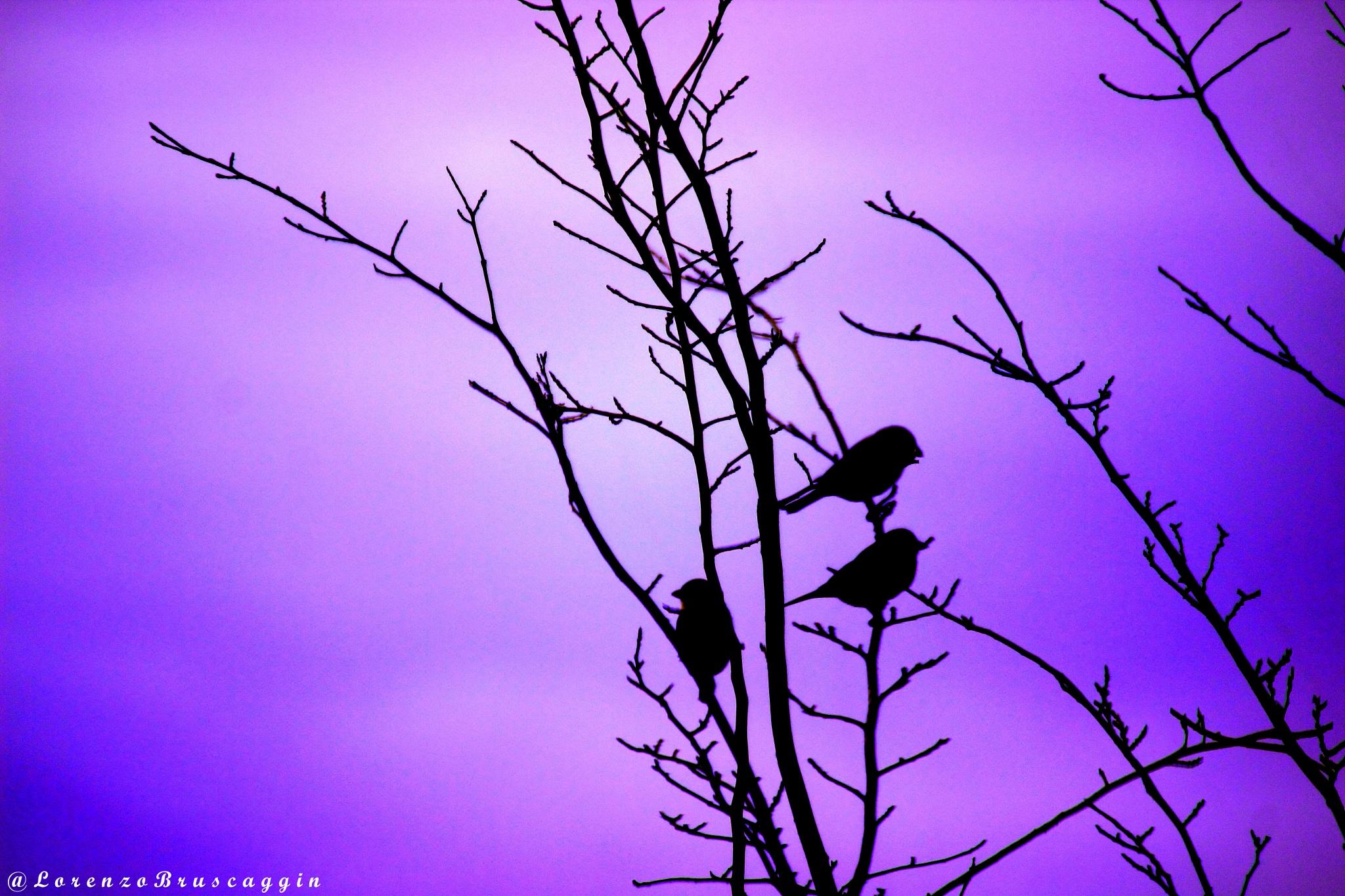 Birds by Lorenzo.Bruscaggin