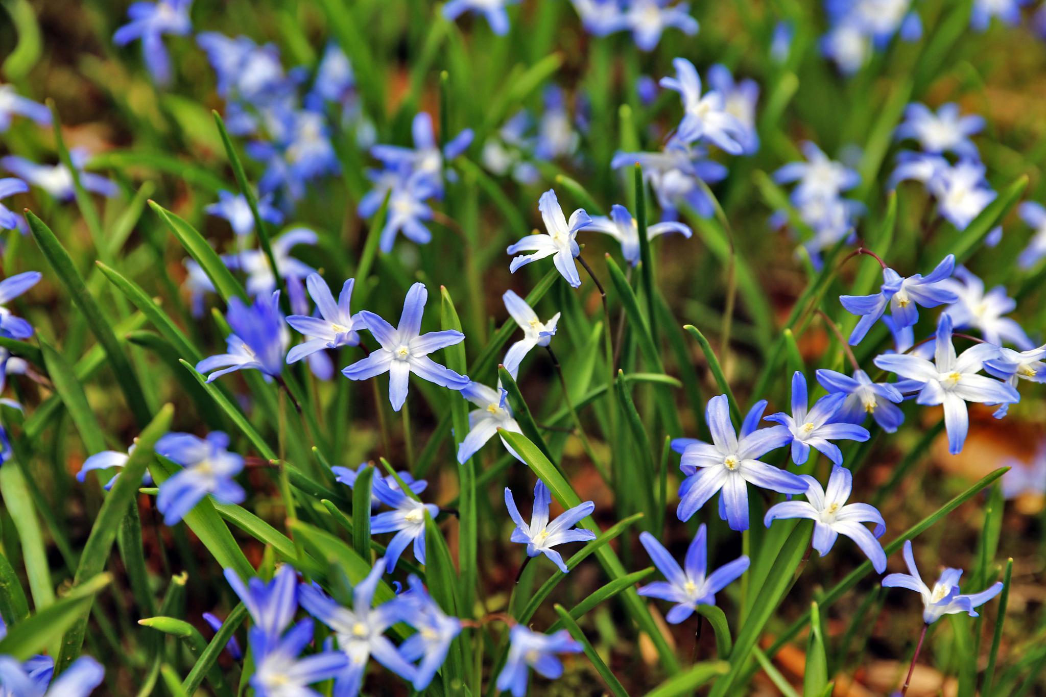 spring by Jürgen Cordt