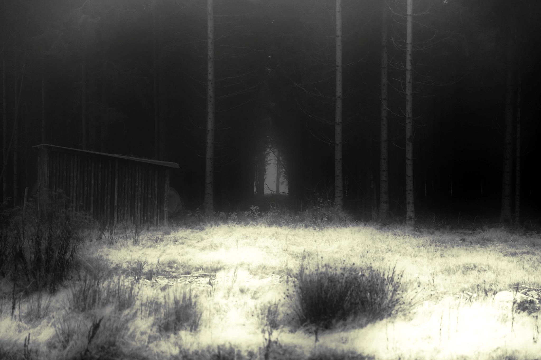 fog by Jürgen Cordt