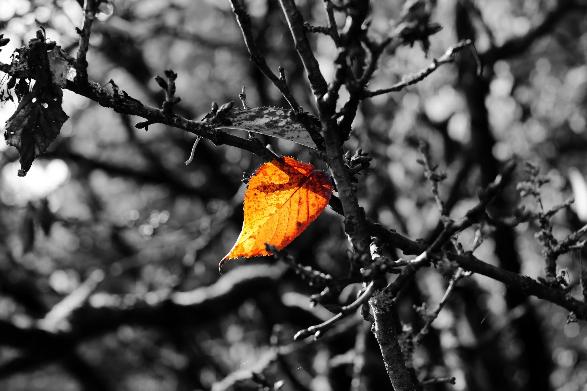 the last leaf by Jürgen Cordt