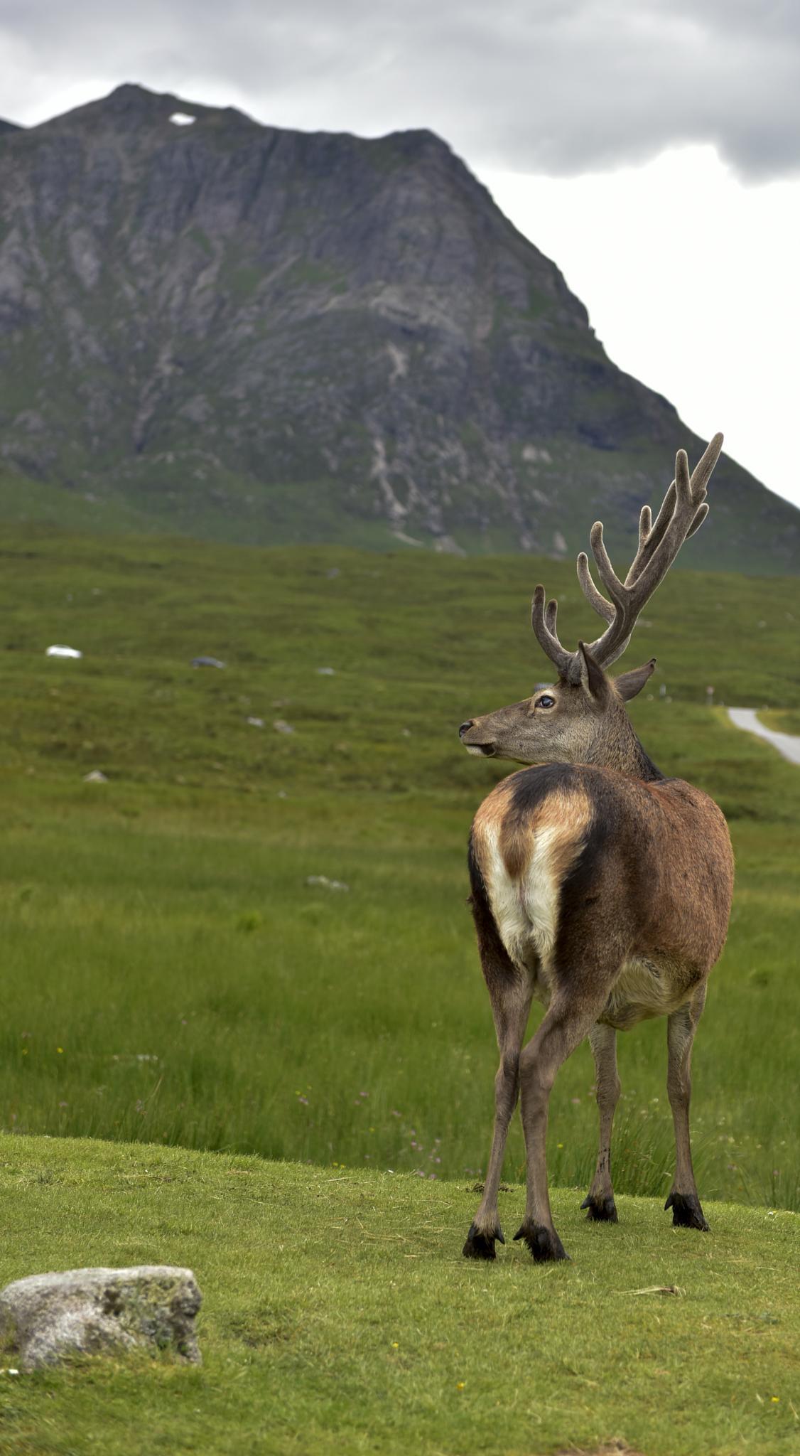 in the wild Scotland  by matt.sumner.376