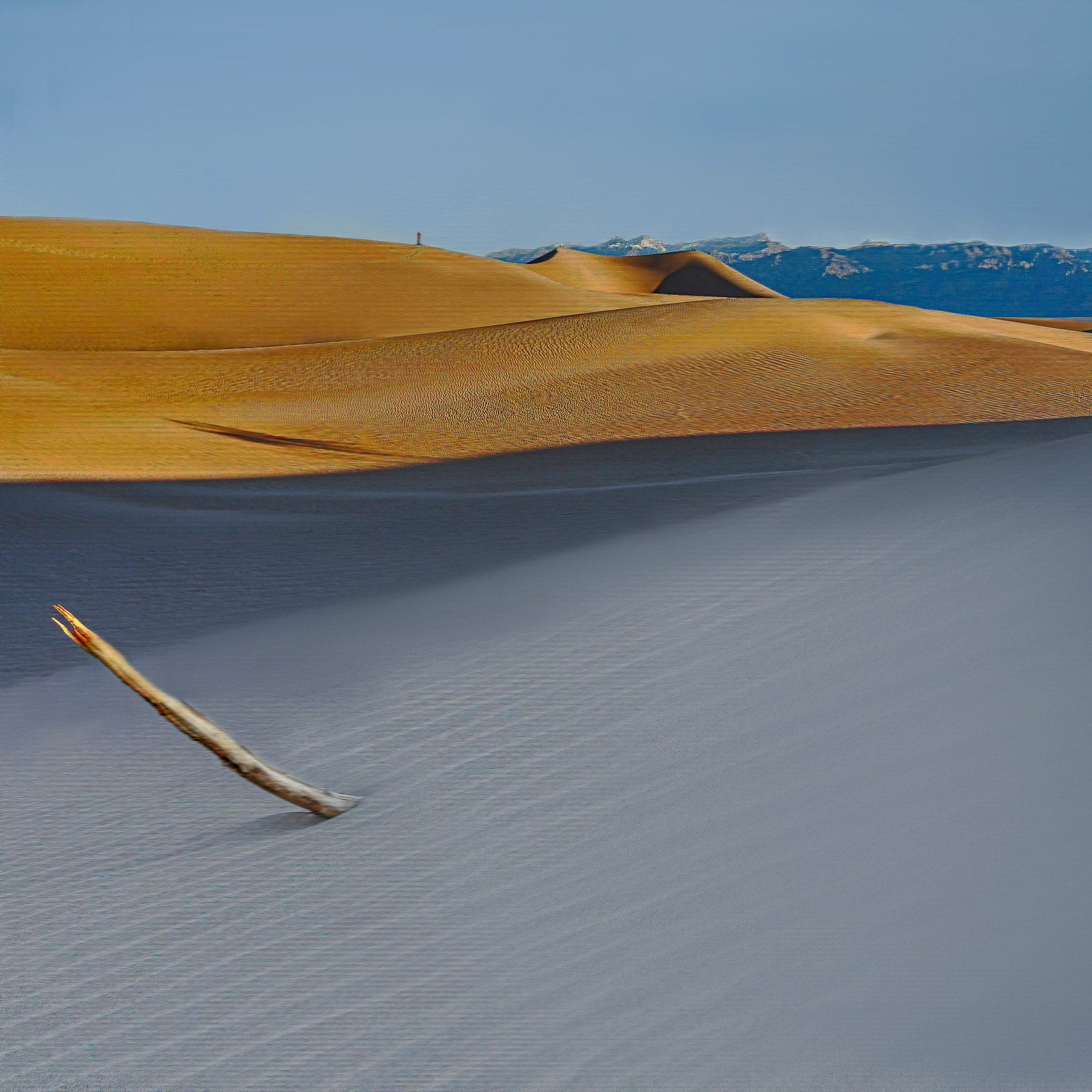 The Mesquite Dunes by Christine C. Abad